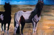 Dineh Horses
